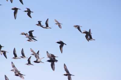 В «Урочище «Трехозерки»  летают около   200 краснокнижных птиц